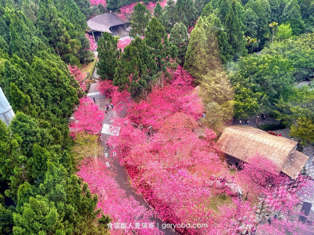 九族文化村。櫻花季全攻略|交通資訊。賞花地點。優惠購票資訊