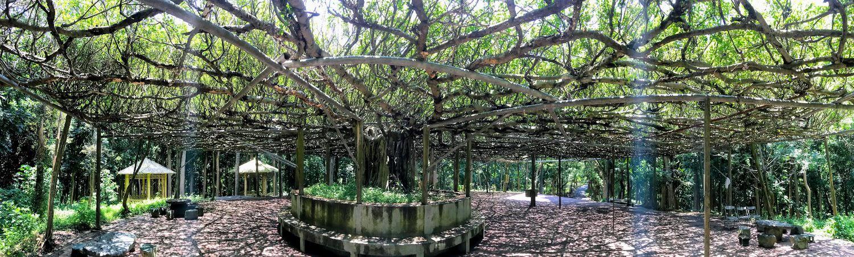 【台南 官田】川文山森林生態保育農場 壯闊的百年榕樹 免費入場 台南川文山半日遊(二)