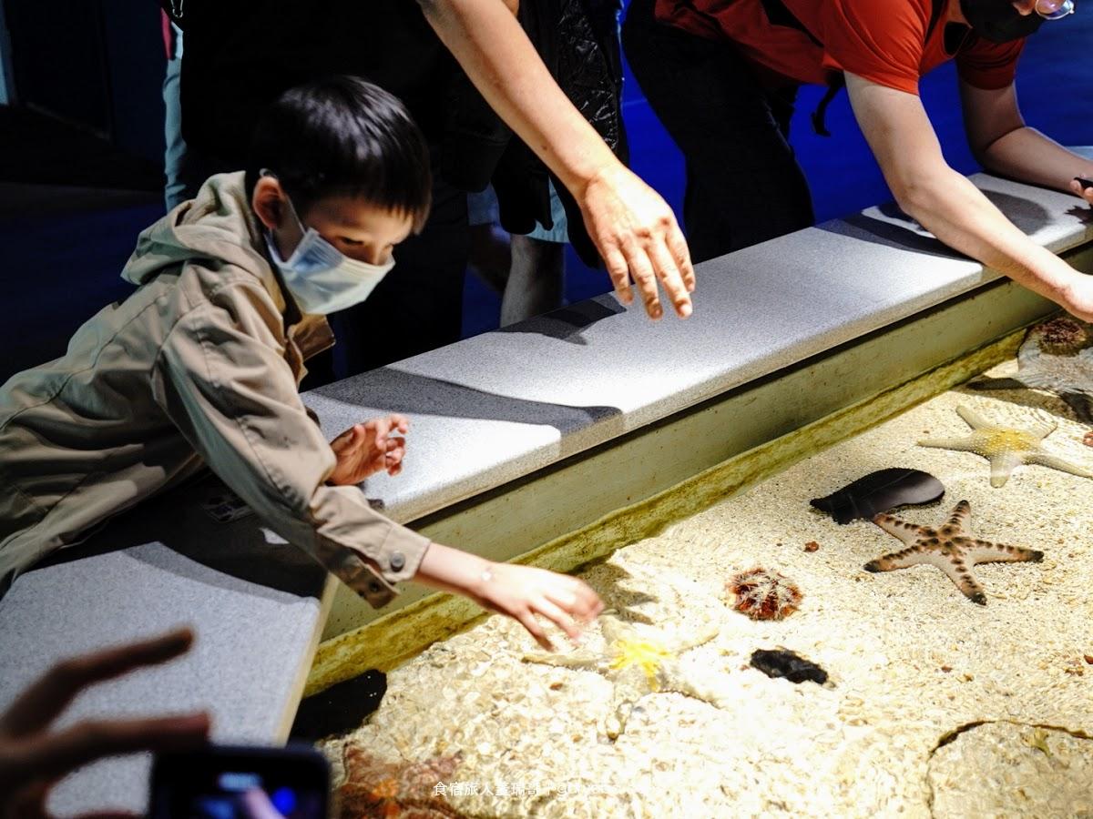 澎湖水族館。超炫砲的餵食秀|海星觸摸池初體驗|澎湖水族館門票、營業時間、交通資訊
